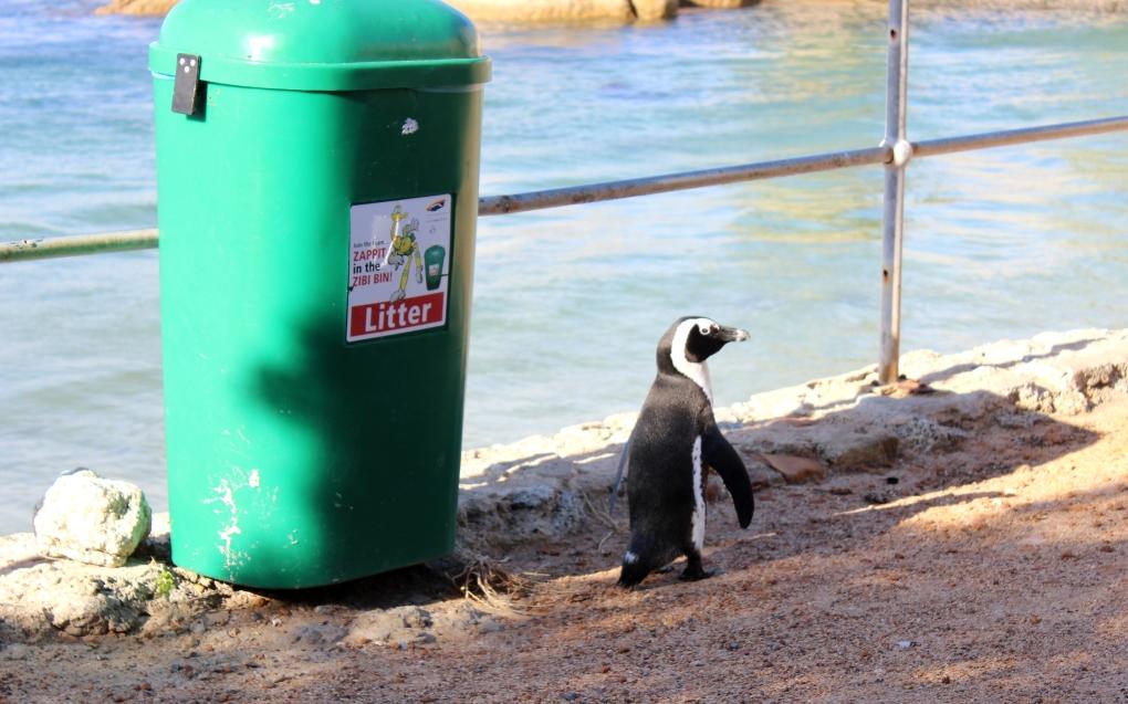 Pinguine 2
