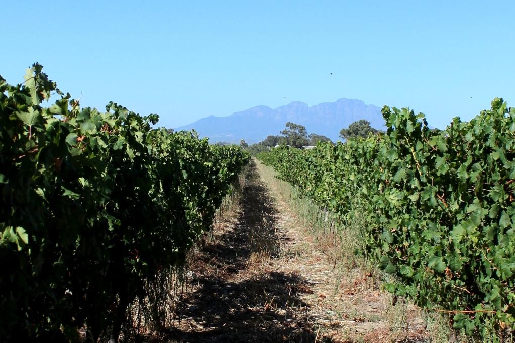 Weintour Stellenbosch