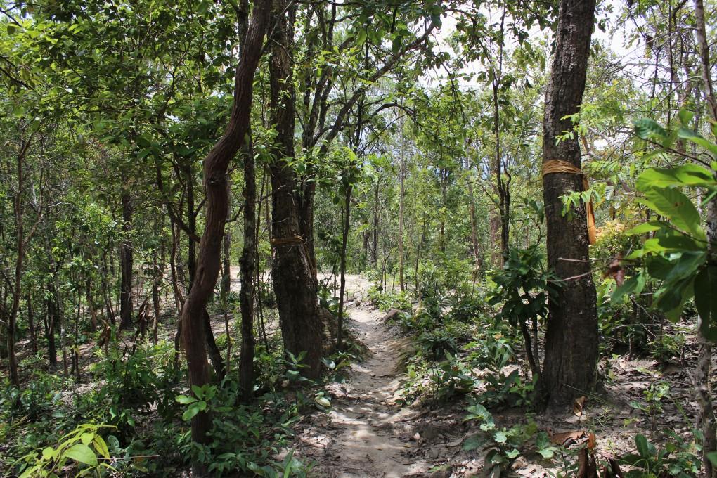 Thailand Wald